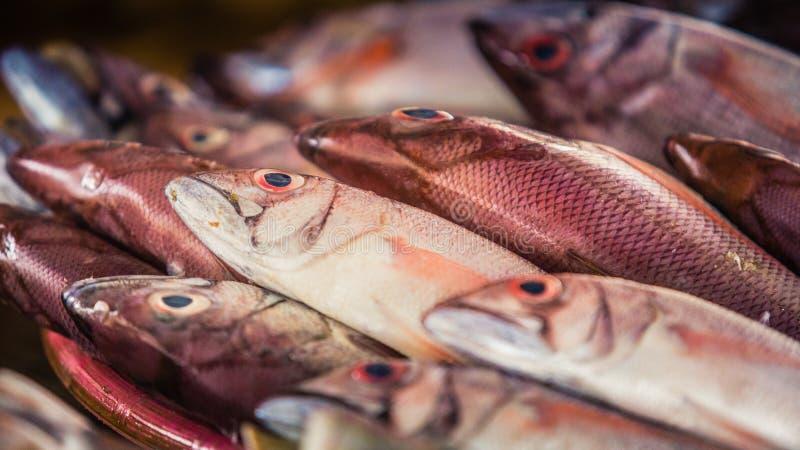 Rode gekleurde vissen bij markt stock fotografie