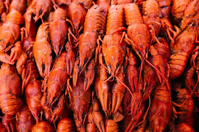 Rode gekookte rivierkreeften royalty-vrije stock foto's