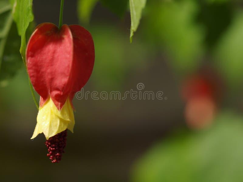 Rode, Gele en Purpere bloei royalty-vrije stock afbeelding