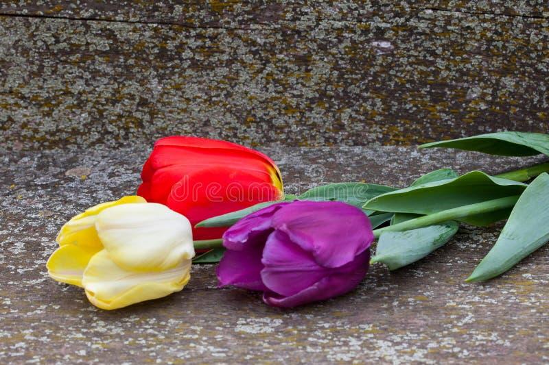 Rode, gele en purpere tulpen royalty-vrije stock fotografie