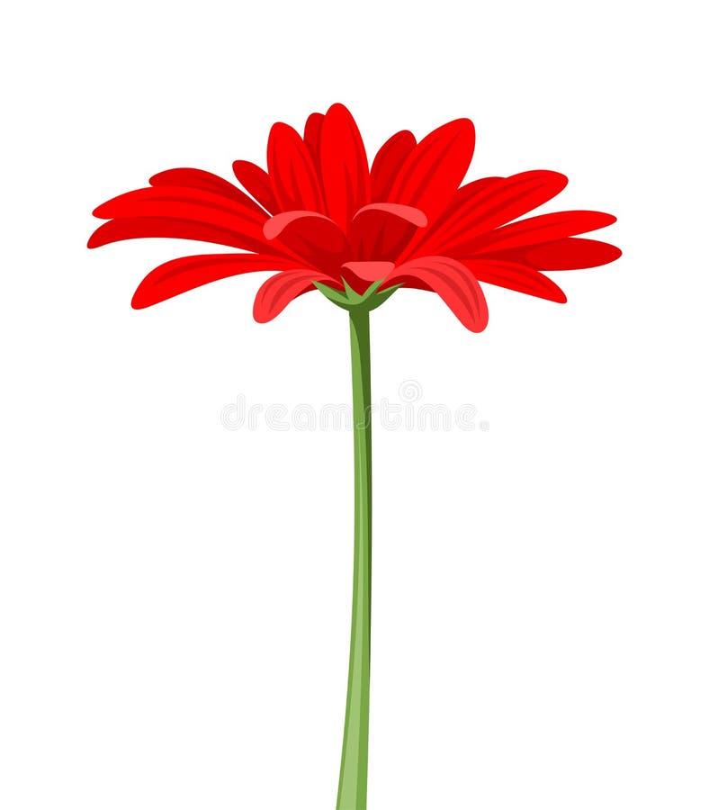 Rode gerbera met stam Vector illustratie stock illustratie