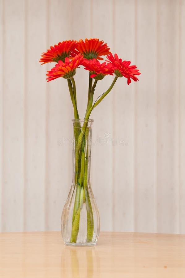 Download Rode gerbermadeliefjes stock foto. Afbeelding bestaande uit bloem - 54075264