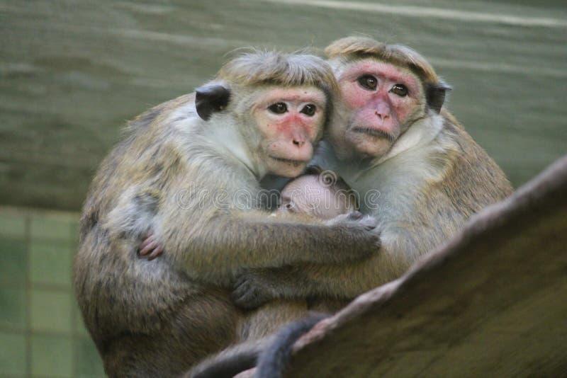 Rode gezichten macaque (Macaca-fuscata) met baby royalty-vrije stock afbeeldingen