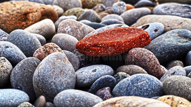Rode, grijze, gele en rotsduiven stock foto