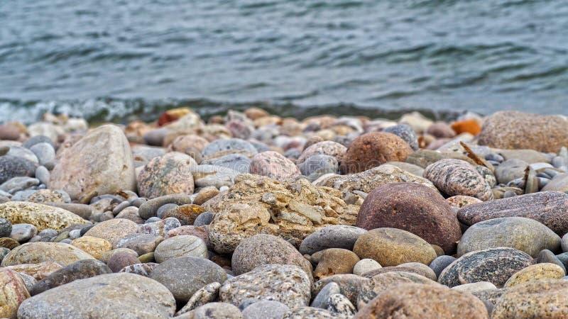 Rode, grijze, gele en rotsduiven op de kust van het meer stock foto