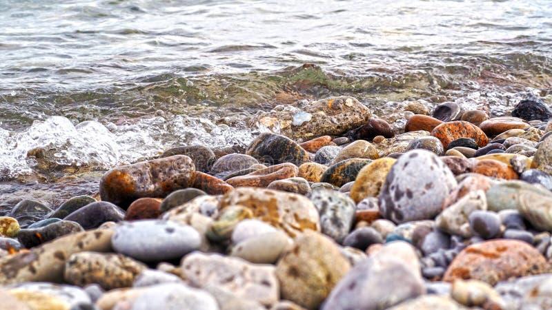 Rode, grijze, gele en rotsduiven op de kust van het meer stock foto's