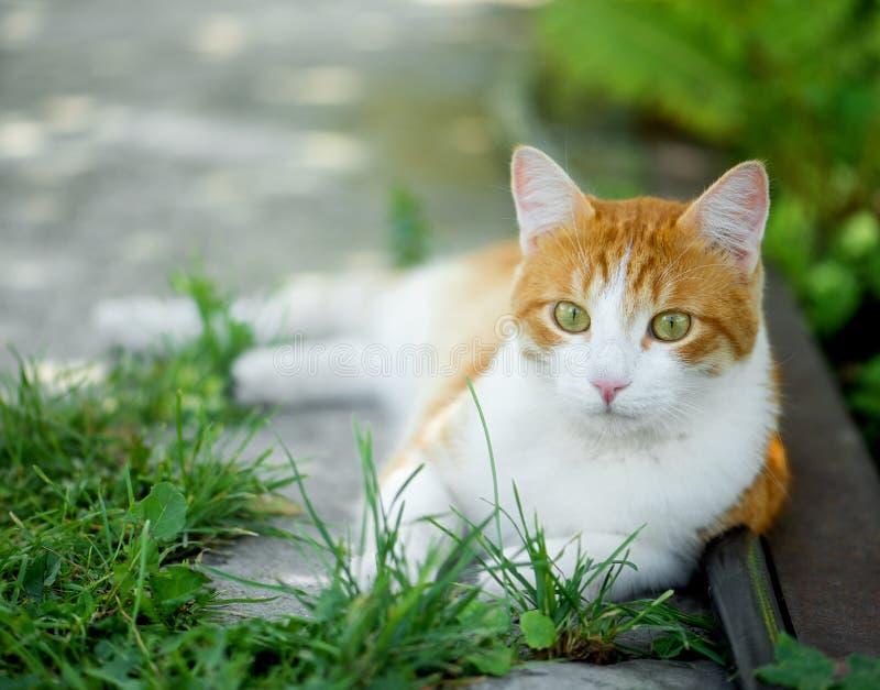Rode groen-eyed kat die op het groene gras rusten royalty-vrije stock afbeeldingen