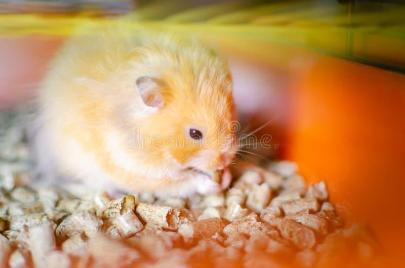 Rode hamster in een kooi stock foto