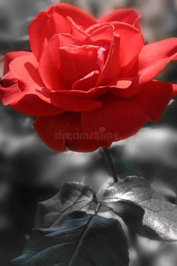 Rode hartstocht royalty-vrije stock foto