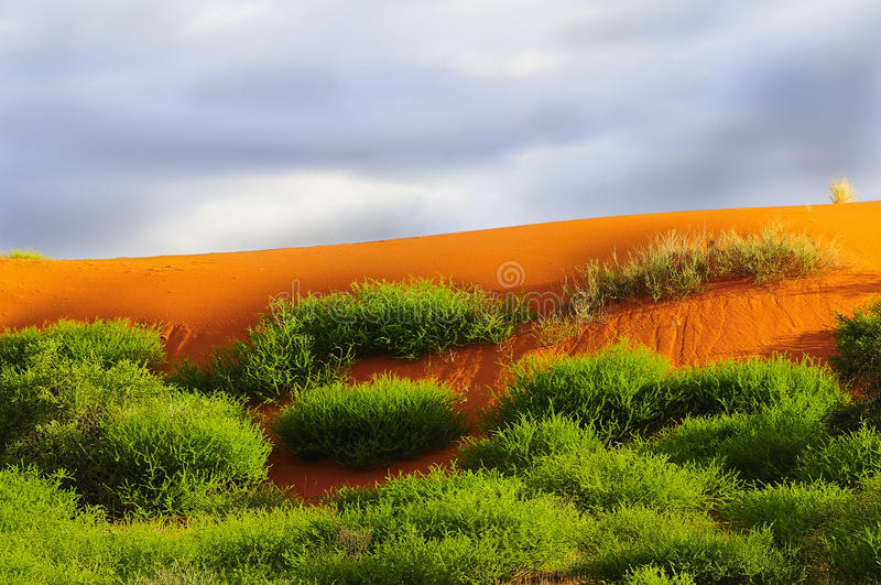 Rode het zandduinen van Kalahari stock foto's