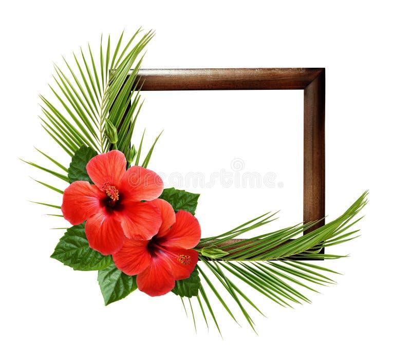 Rode hibiscusbloemen en palmbladen in hoek tropische regeling op houten kader royalty-vrije stock afbeelding