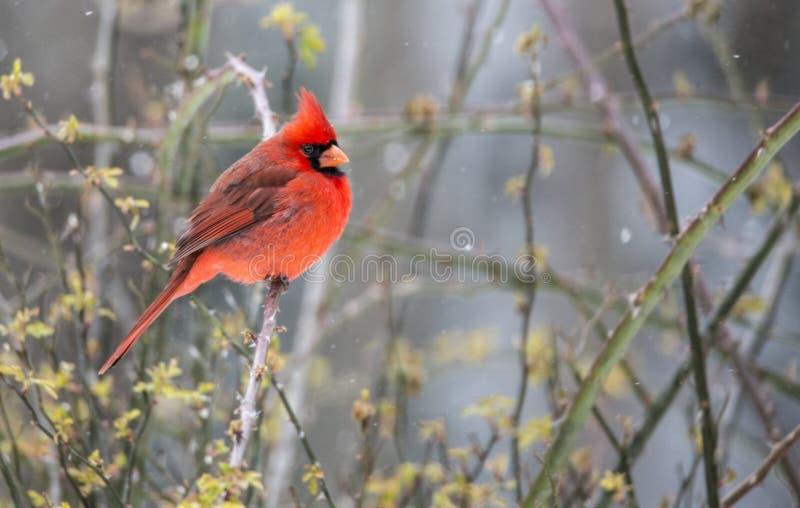 Rode Hoofdtopposities in de sneeuw royalty-vrije stock afbeelding