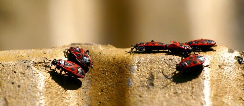 Rode insecten royalty-vrije stock foto's