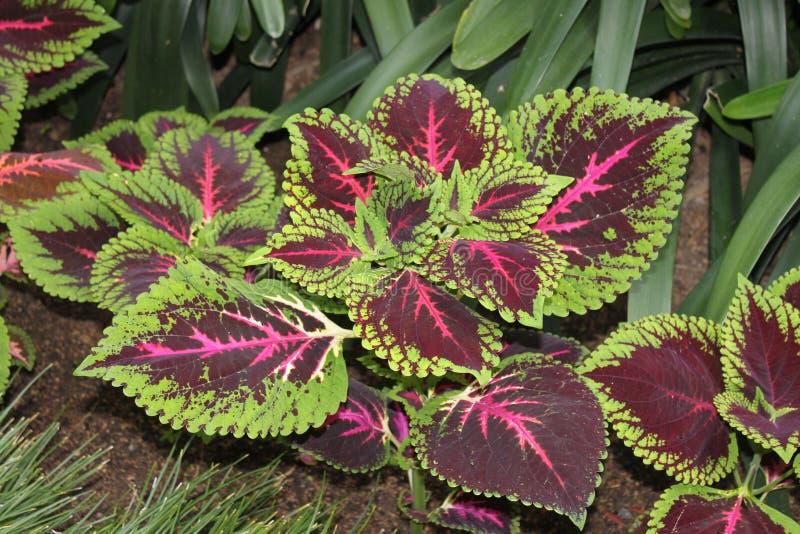 Rode installatie in botanische tuin stock foto