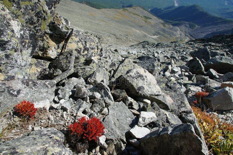 Rode installaties bovenop de berg royalty-vrije stock afbeelding
