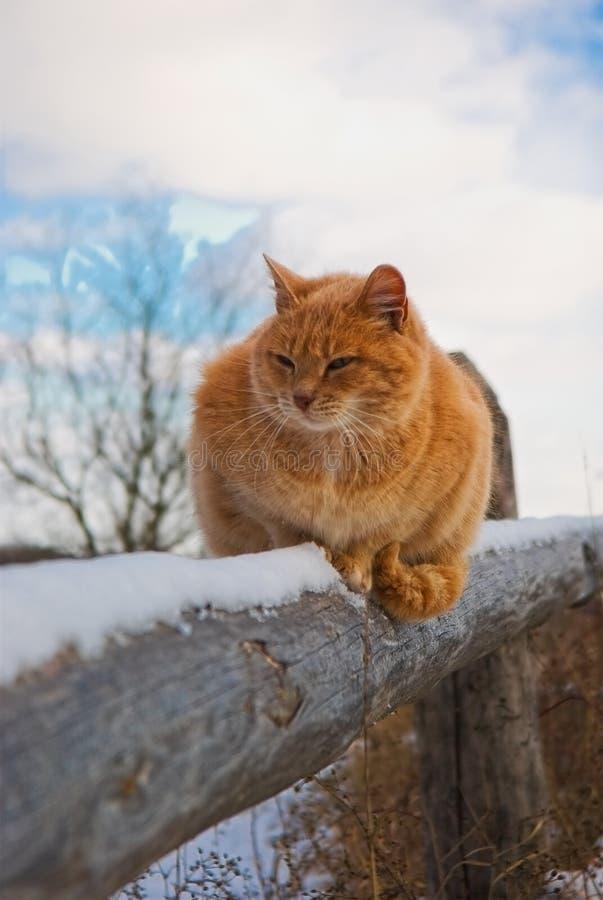 Rode kat royalty-vrije stock foto's