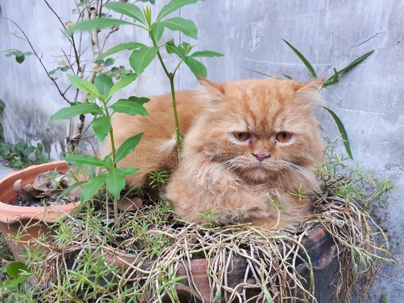 Rode kat in boompot royalty-vrije stock afbeelding