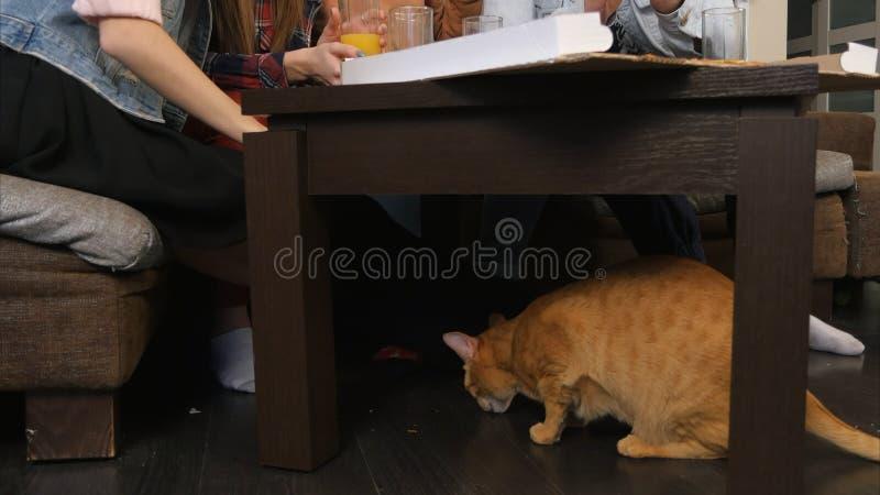Rode kat in het kader van de lijst, die crumbs eten, terwijl jonge vrienden die pizza en het spreken eten stock fotografie