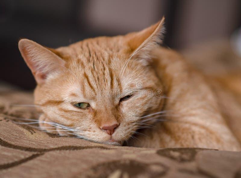 Rode kat met een ontstemde blik stock fotografie