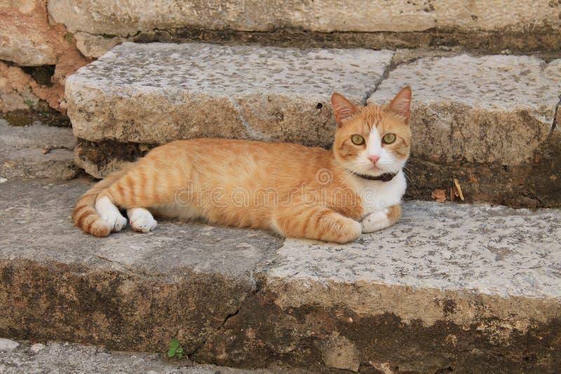 Rode kat op de treden stock fotografie