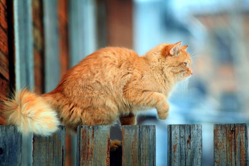 Rode kat op een omheining stock foto