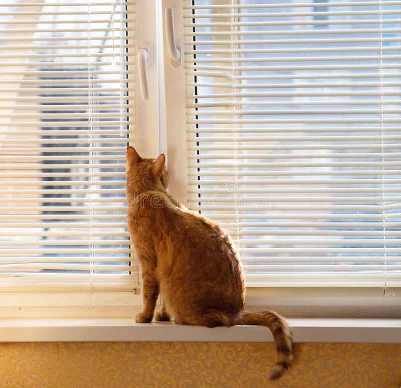 Rode kat op het venster in de lente stock afbeeldingen