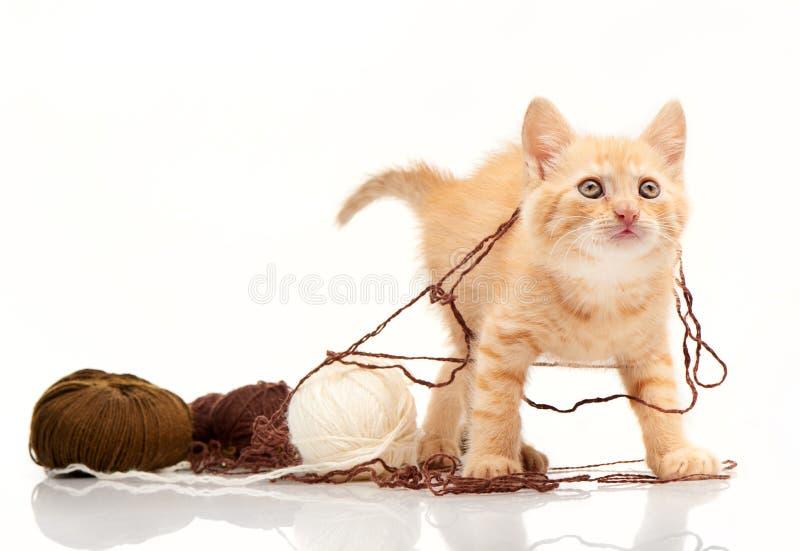 Rode katje het spelen clews van draad stock fotografie