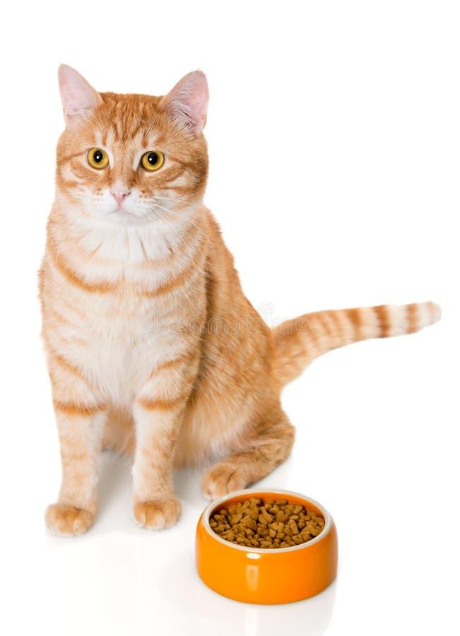 Rode kattenzitting dichtbij de kom droog voedsel royalty-vrije stock foto's