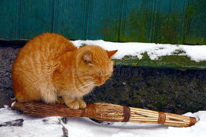 Rode kattenzitting op een bezem in de sneeuw dichtbij de muur stock afbeeldingen