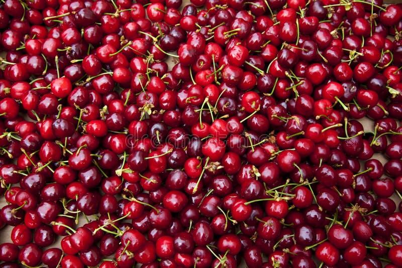Rode Kersen royalty-vrije stock fotografie