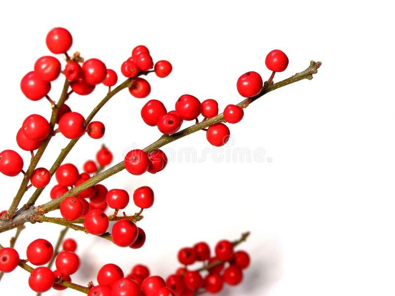 Rode Kerstmisbessen stock afbeelding