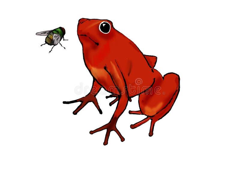 Rode kikker en vlieg vector illustratie