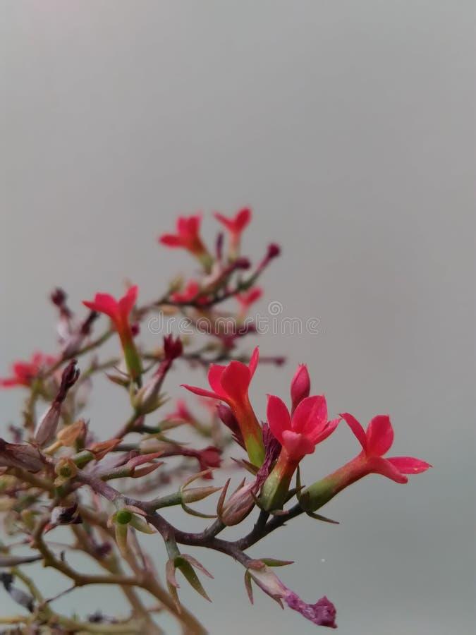 Rode kleine bloemen stock afbeeldingen