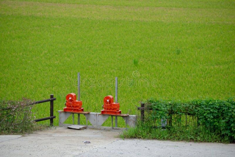 Rode kleppen van waterpoort voor irrigatiesysteem in padiepadieveld stock foto