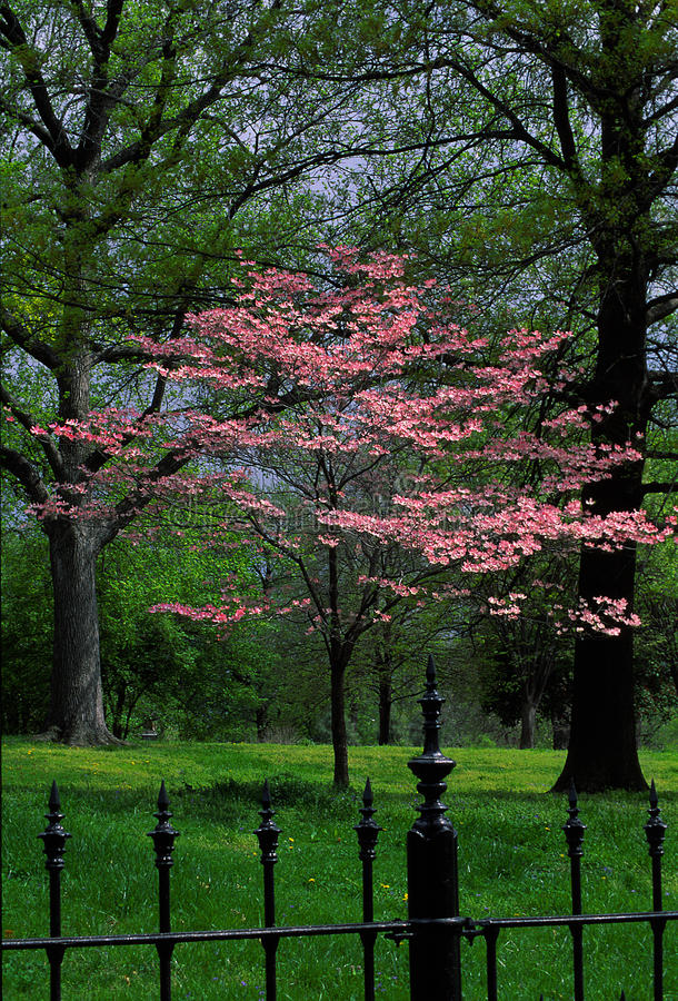 rode knop in park royalty-vrije stock afbeelding
