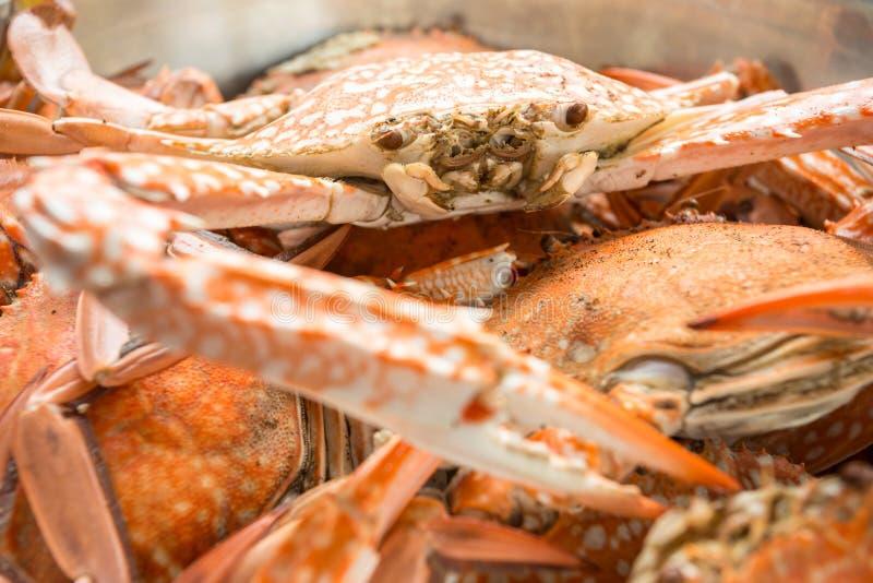 Rode Krab royalty-vrije stock fotografie