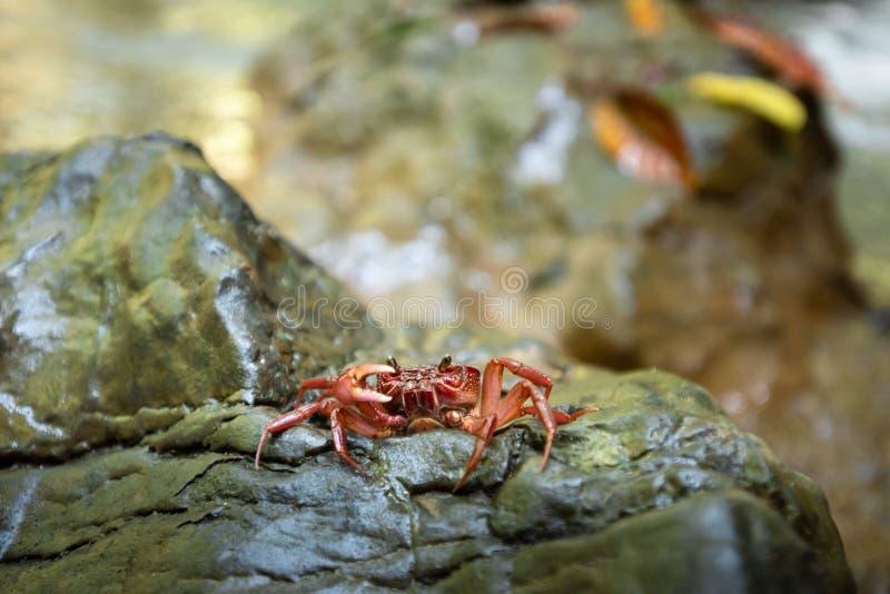 Rode krab in de waterval Waterval met natuurlijke achtergrond waterval thailand tropisch royalty-vrije stock fotografie