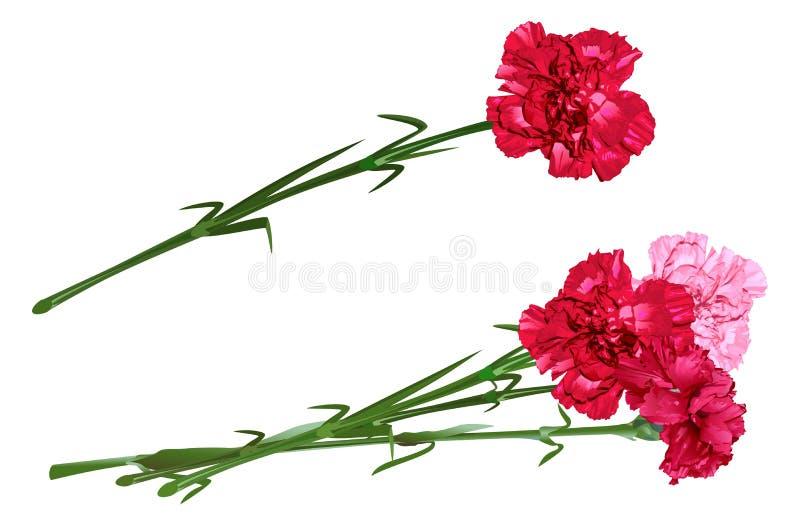 Rode kruidnagel Boeket van anjers Vastgestelde anjerbloemen vector illustratie