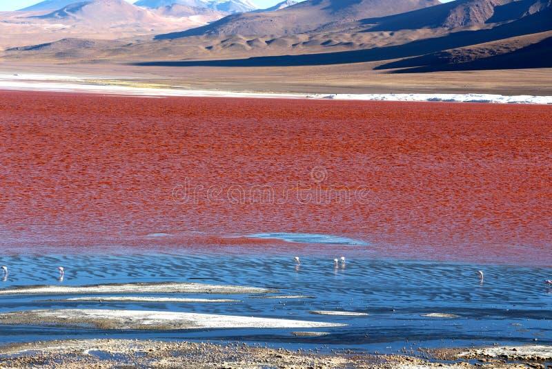 Rode Lagune Bolivië stock afbeelding