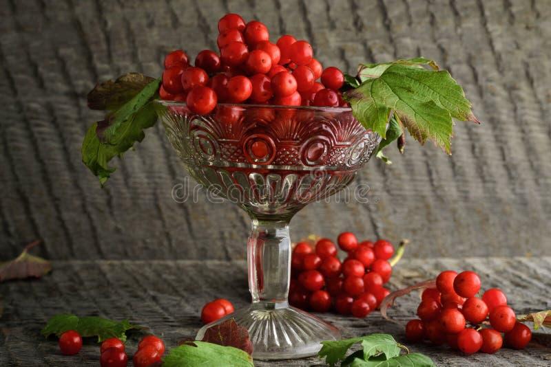 Rode lijsterbes in een vaas op een houten achtergrond stock fotografie