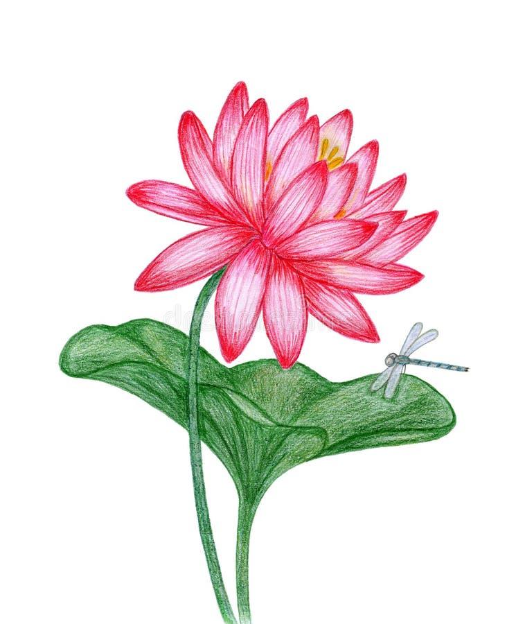 Rode lotusbloem met libel stock fotografie