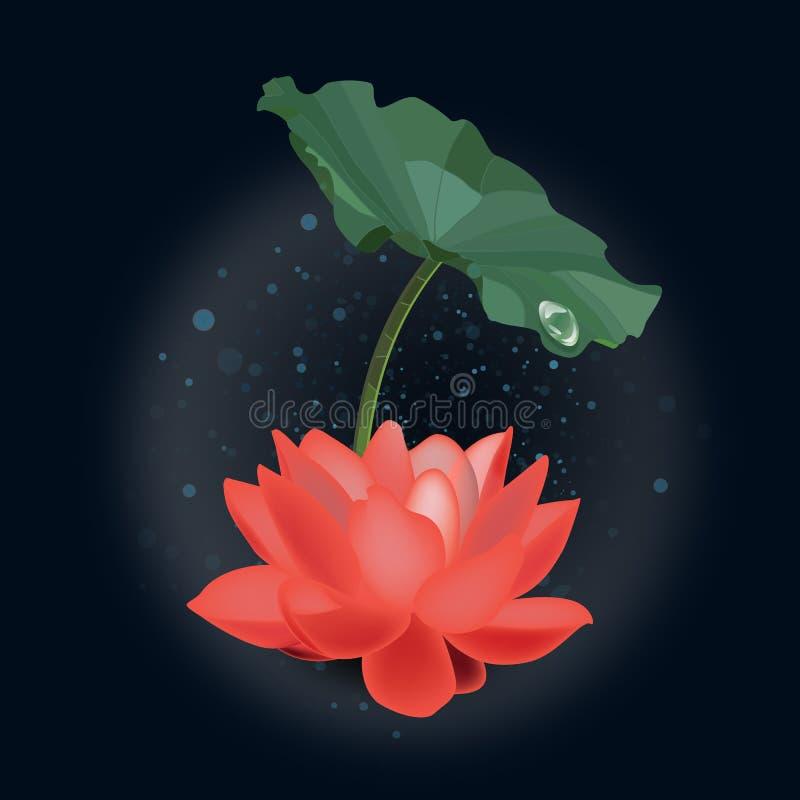 Rode lotusbloem onder blad in regen stock illustratie