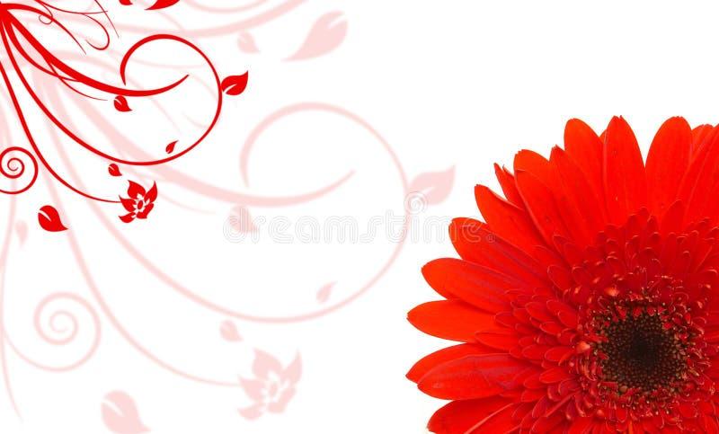 Rode madeliefjeachtergrond vector illustratie