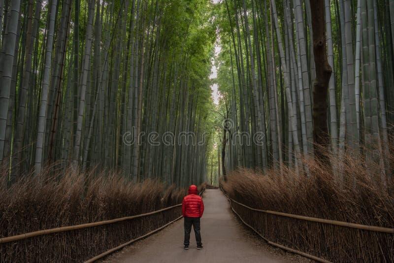 Rode mens in het bamboebos stock afbeeldingen
