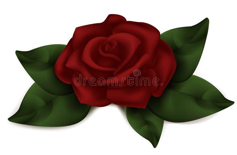 Rode Mooi nam toe Donkere roze volslagen realistische Roos vector illustratie