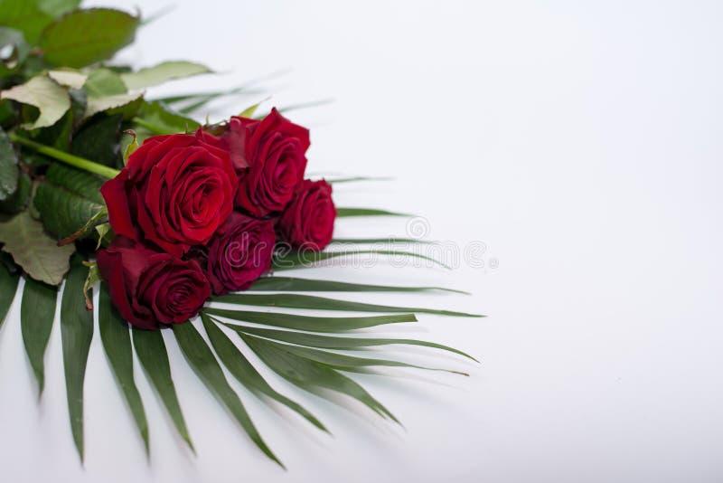 Rode mooie bloemen op wit Boeket van rozen Rood nam toe royalty-vrije stock fotografie