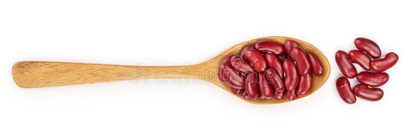 Rode nierboon in houten die lepel op witte achtergrond wordt ge?soleerd Hoogste mening Vlak leg stock illustratie