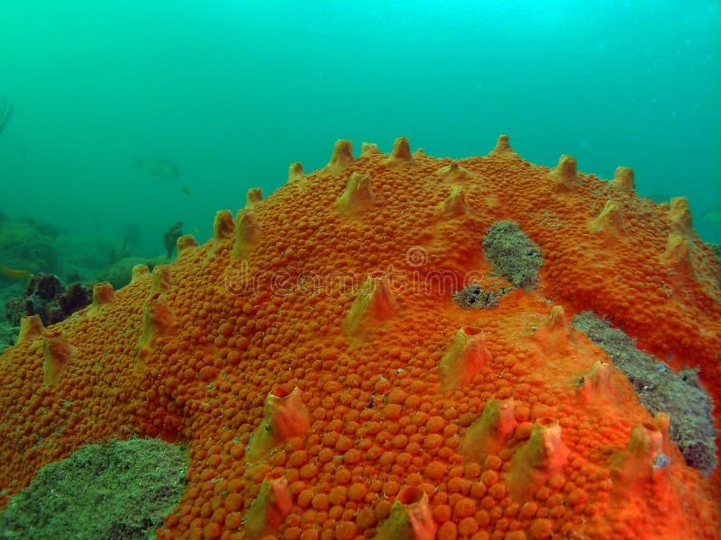 Rode Oranje Boring Spons stock fotografie