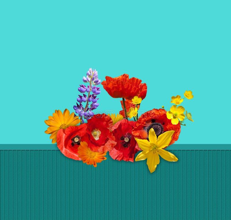 Rode, oranje, gele bloem op de groene omheining Rode papavers, gele lelie, blauwe lupine, oranje goudsbloem royalty-vrije stock foto