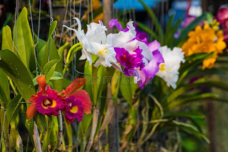Rode orchideeën, purper, wit, geel verkocht op bloemmarkt royalty-vrije stock fotografie